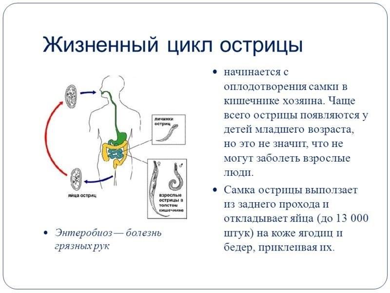средство от глистов у человека отзывы врачей