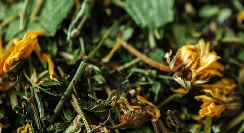 лисички как средство от глистов