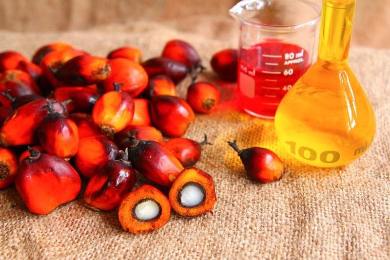 Плоды пальмового дерева