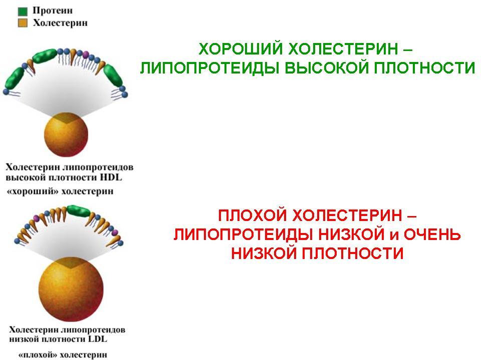 Группы препаратов понижающие холестерин в крови