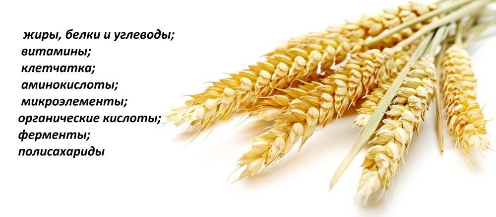Состав зерен проросшей пшеницы
