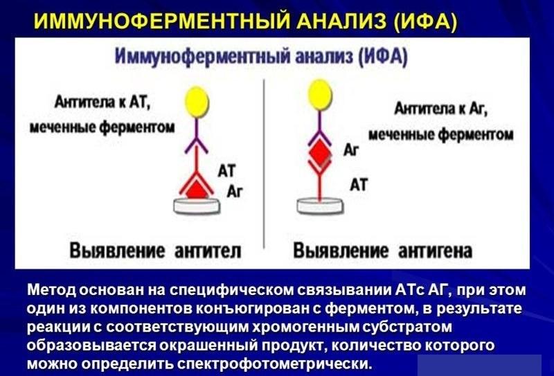 Токсоплазмоз при беременности анализ на токсоплазмоз при беременности