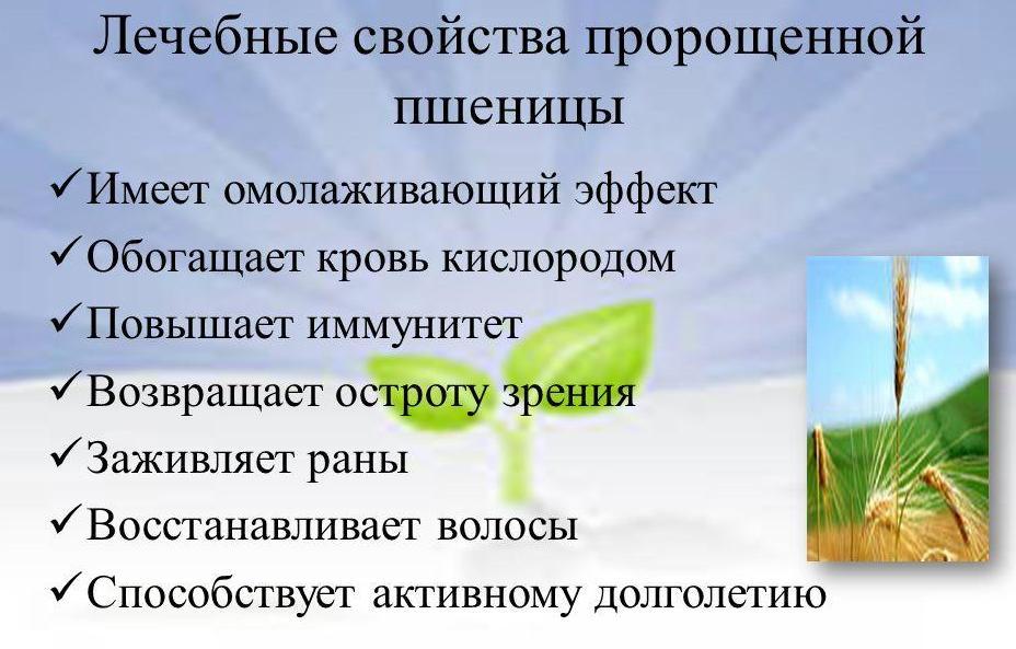 Польза пророщенной пшеницы