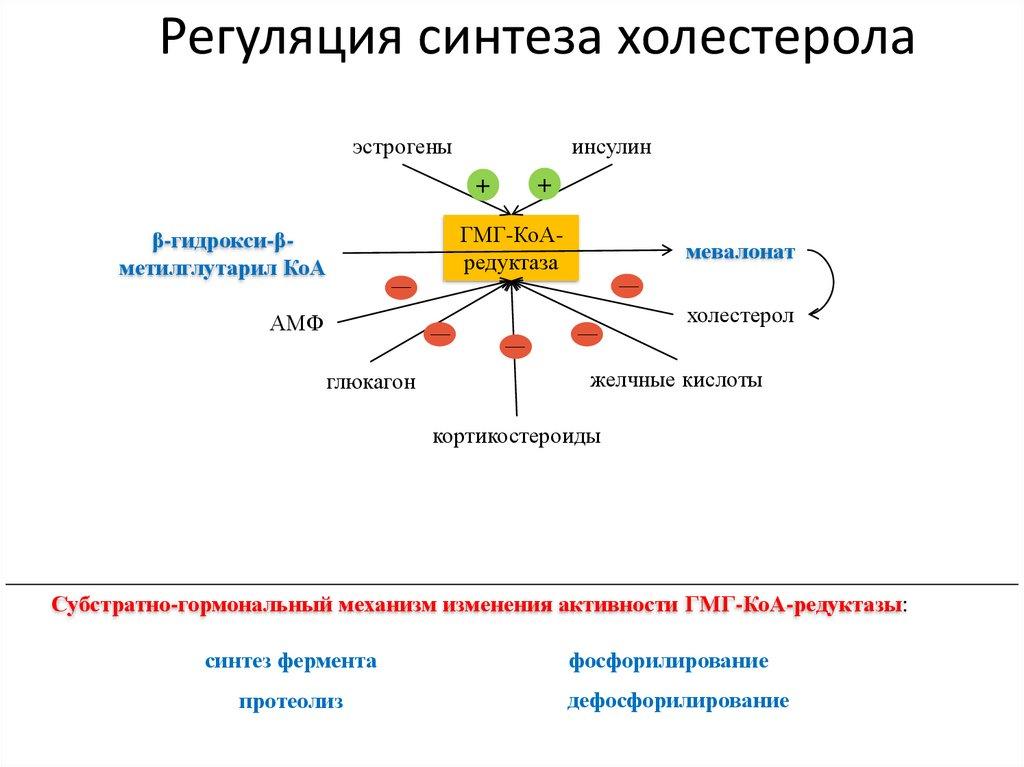 Регуляция холестерола в организме