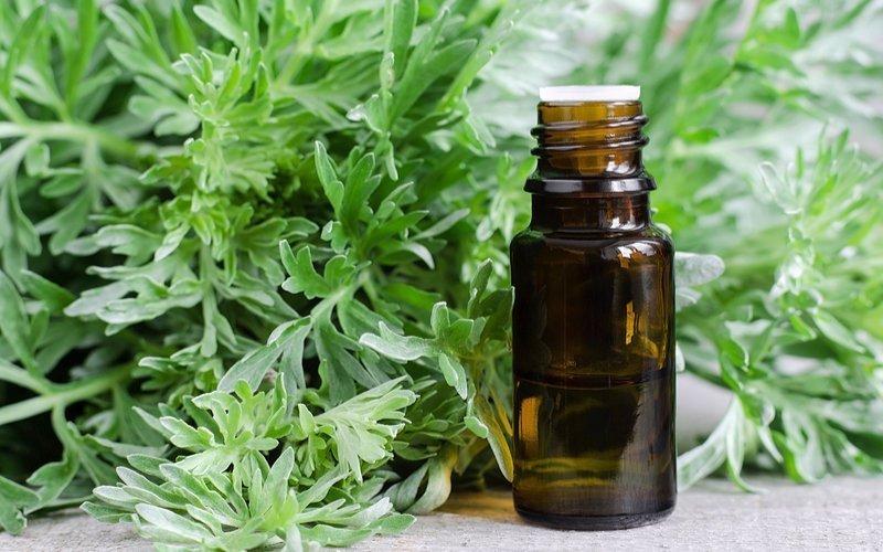 Настой лекарственных трав полыни