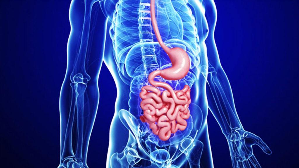 Благоприятные условия для полноценной работы органов желудочно-кишечного тракта