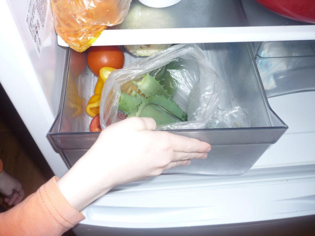 Поместить в холодильник листья алоэ